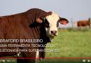 Vídeo institucional produzido pela ABHB para o Congresso Mundial Braford destaca as qualidades da raça brasileira