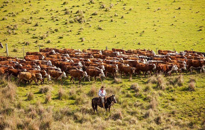 ABHB apoia exposição de fotos sobre o Bioma Pampa