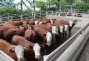 ABHB divulga datas do VIII Concurso de Carcaças Carne Hereford